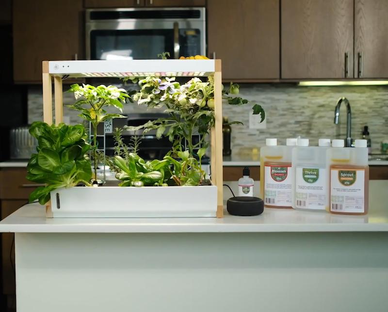 Rise Garden Announces Their Personal Indoor Smart Garden