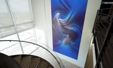 Blackdove Curates Digital Art Gallery for Custom Integrator Clients